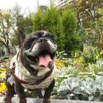 愛犬と一緒に「靭公園」をお散歩&お気に入りのカフェ「サウスウェル」でわんこ会<大阪市>