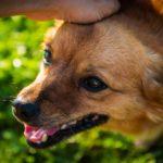 犬が男性を苦手なことが多い理由と対処法