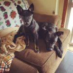 保護犬の多頭飼いで、気を付けることは?多頭飼い崩壊はどうして起こる?