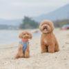 富士五湖にズームイン!愛犬と楽しめる河口湖周辺のおススメスポット7選!
