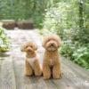 愛犬と一緒にニューオープンのホテルに泊まろう!ルシアン旧軽井沢&レジーナリゾート旧軽井沢