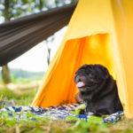 愛犬と一緒にアウトドアを楽しみたい♡ワンコと行ける関東のキャンプ場4選