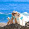 ゴールデンウィークは沖縄旅行でリゾートを満喫♪愛犬と一緒に泊まれるホテル5選!