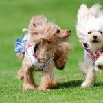 楽しめること間違いなし!ゴールデンウィークに愛犬と参加できる関東近郊のイベント特集