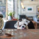 スイーツ好きには特におすすめ♡愛犬と一緒に行ける千葉県のオーガニックレストラン!