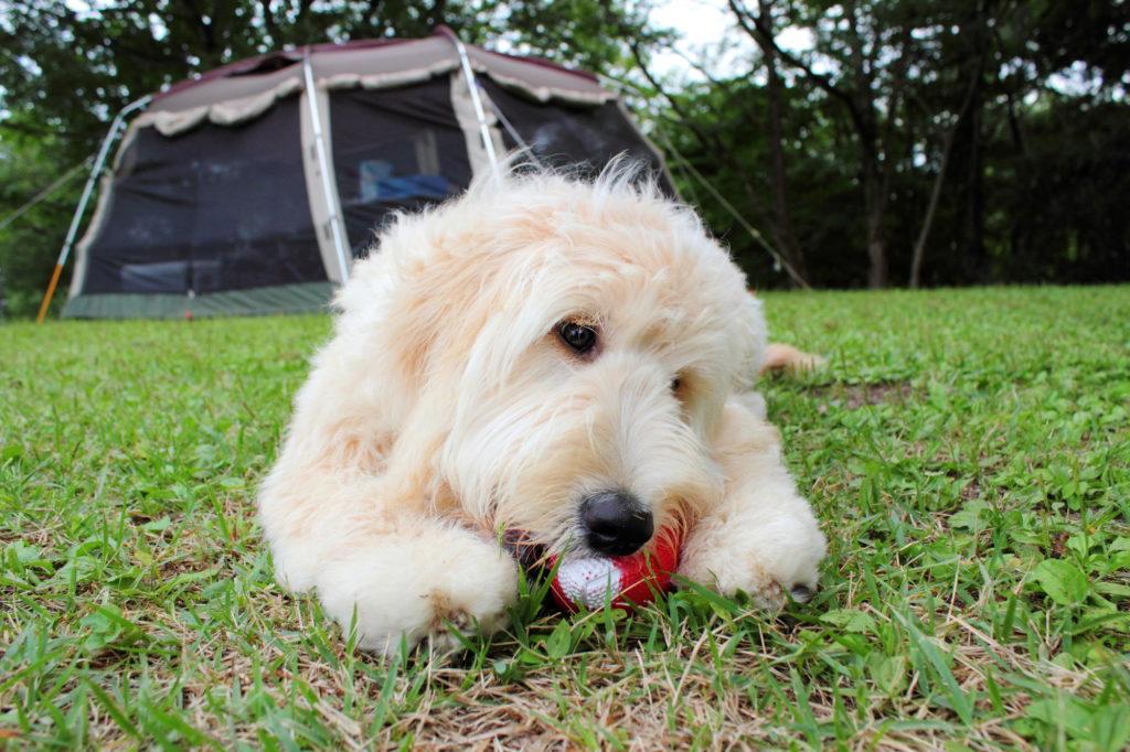 愛犬と一緒にアウトドアを楽しみたい♡東海周辺のペット大歓迎のキャンプ場!