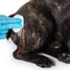 【犬の皮膚疾患】アレルギーの種類から、オススメのフードやシャンプーまでご紹介!