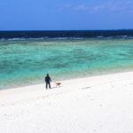 沖縄在住ライターがオススメする、犬と旅する沖縄の観光スポット!