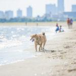 沖縄を犬と旅しよう!沖縄だからこそ、愛犬に注意してほしいこと。