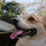 歩くのが大好きなワンちゃんにオススメ!愛犬と一緒に1,159段の表参道を登って、久能山東照宮を参拝してきました