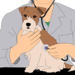信頼できる獣医師・動物病院の選び方と上手な付き合い方