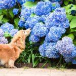 梅雨のお散歩を満喫しちゃおう!愛犬と一緒にアジサイが楽しめるスポット特集<関東>