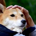 保護犬のボランティアがしたい!どうしたらできる?