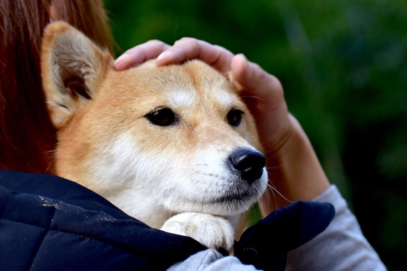 保護 犬 ボランティア