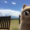 我が家のお気に入り♡愛犬と一緒に自然を満喫しながら軽井沢の隠れ家グルメ