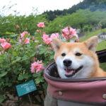 <関東版>愛犬と一緒に5月に春の花が楽しめる絶景フラワーガーデン!