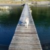 <四国版>小型犬~大型犬までOK!愛犬と一緒に泊まれる宿と周辺の観光スポット情報