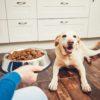 犬の食事の基本的なこと~回数や時間、手作り食について~