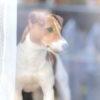 お散歩に行きたい!梅雨の雨の日でもおうちでできる愛犬ストレス解消法