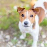 保護犬の里親になる!子犬と成犬、どちらの方が育てやすい?