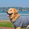 <北陸版>小型犬~大型犬までOK!愛犬と一緒に泊まれる宿と周辺の観光スポット情報