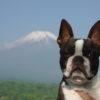 富士五湖にズームイン!愛犬と楽しめる山中湖周辺のおススメスポット6選!