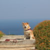 <淡路島・兵庫県版>愛犬と一緒に5月に春の花が楽しめる絶景フラワーガーデン!