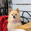 我が家のお気に入り♡愛犬と一緒に食い倒れ旅行!軽井沢のグルメ特集