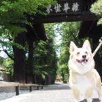 緑に囲まれた自然の中で愛犬と一緒にのんびり散策が楽しめる!「乾徳山 恵林寺」<山梨県>
