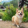 ワンちゃんとのどかな日本の原風景を散策しよう♪「西湖いやしの里 根場(ねんば)」