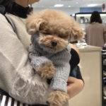 【千葉駅】愛犬と気軽にお出かけ!駅近デパートでショッピング&隠れ家カフェでランチ