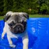 本格的な夏がくる前に!知っておきたい愛犬の暑さ対策