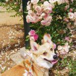 愛犬と一緒に絵本の世界へ~♪熱海の観光名所「アカオハーブ&ローズガーデン」<伊豆ドライブ vol.1>