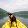 愛犬と一緒に楽しめる夏のウォータースポーツ特集!~カヌー・カヤック・ラフティング体験できるスポット情報~