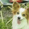 愛犬と一緒にキャンプやアウトドア・アクティビティで使えるワンちゃん用便利グッズ!!