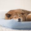 <室内用>暑い夏を乗り切ろう!愛犬のための暑さ対策グッズ10選