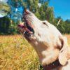 <屋外用>暑い夏を乗り切ろう!愛犬のための暑さ対策グッズ8選