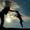 世界一人を殺した犬といわれるピットブルは、アメリカではセラピードッグ代表。