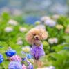 愛犬と一緒にヨーロッパ旅行気分~♪一年中楽しめる長崎のハウステンボス【6/16(土)・17(日)はワンコイベント開催】