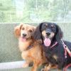 愛犬と一緒に楽しめる空中散歩♪全国のロープウェイ&ゴンドラ&ケーブルカー情報!!