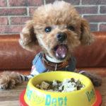 犬歴18年の私が考える愛犬のドッグフード選び!ノンオイルコーティングのおすすめドックフードはコレ!
