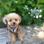 猛暑の夏を乗り切ろう!おしゃれで可愛い愛犬のクール服特集