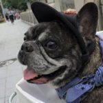 オーナーも一緒に楽しむ愛犬の服選び!ハンドメイドのお店もご紹介~フレンチブルドッグ編~