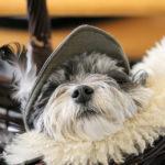 お揃いが可愛い♡この夏、愛犬と楽しむリンクコーデ
