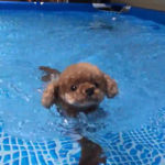 猛暑の夏を乗り切ろう!愛犬のお散歩グッズ&ひんやり安眠グッズ特集