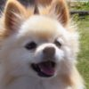 つぶらな瞳に焼きつけたい景色を求めて!愛犬とドライブ〜清里・八ヶ岳編~