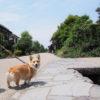 江戸時代の美しい町並みが残る静かな宿場町「海野宿」を愛犬とお散歩♪<長野県>