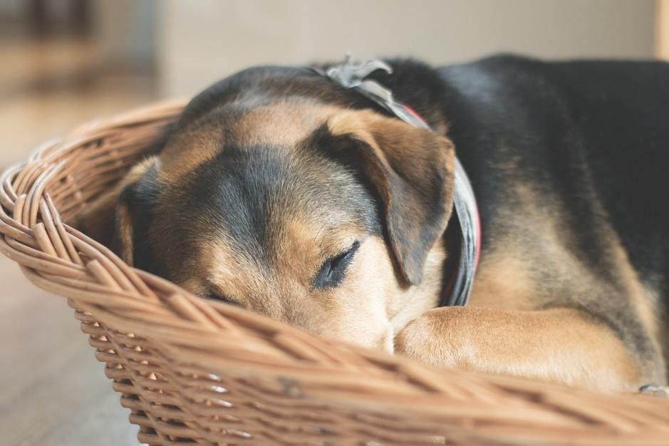 愛犬の食欲不振 原因と対策 愛犬との旅行ならイヌトミィ