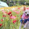 夏のスキー場は癒やしスポット♪愛犬と一緒にお花を楽しめる高原のスキー場5選