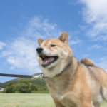 夏でも涼しい清里高原!愛犬と一緒に楽しめる人気の観光スポット&お食事処&お宿
